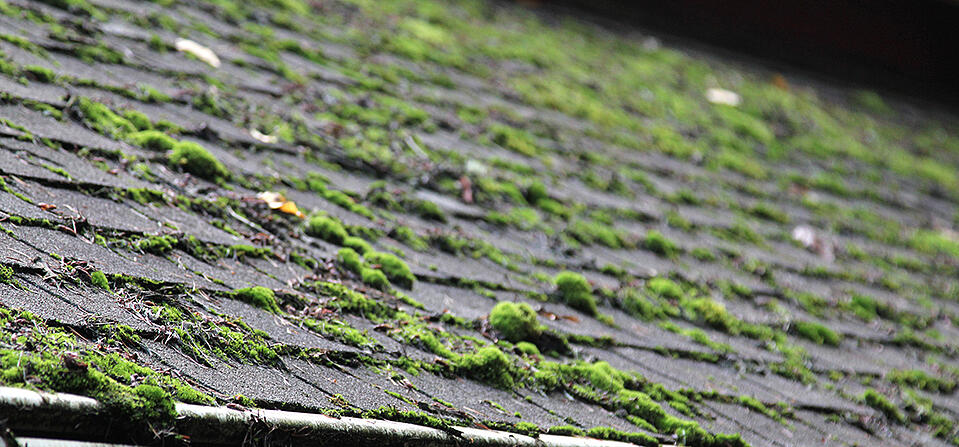 Moss and Algae on Your Roof: What Homeowners Need to Know